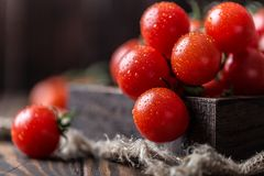 Μικρές κόκκινες ντομάτες κερασιών στο αγροτικό υπόβαθρο Ντομάτες κερασιών στην άμπελο Στοκ εικόνες με δικαίωμα ελεύθερης χρήσης