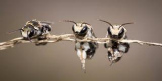 Μικρές μέλισσες Στοκ φωτογραφία με δικαίωμα ελεύθερης χρήσης