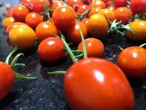 μικρές ντομάτες Στοκ φωτογραφίες με δικαίωμα ελεύθερης χρήσης
