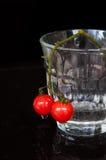 Μικρές ντομάτες Στοκ εικόνα με δικαίωμα ελεύθερης χρήσης