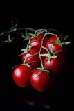 μικρές ντομάτες στοκ φωτογραφίες