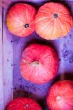 Μικρές πορτοκαλιές κολοκύθες σε μια ξύλινη περίπτωση Στοκ Εικόνες
