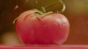 Μικρές πτώσεις του νερού που στάζει στην όμορφη ντομάτα απόθεμα βίντεο