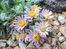 Μικρές xeric εγκαταστάσεις - ρόδινα λουλούδια στοκ φωτογραφία με δικαίωμα ελεύθερης χρήσης