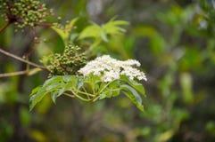 Μικρή άσπρη συστάδα λουλουδιών Στοκ εικόνες με δικαίωμα ελεύθερης χρήσης