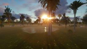Μικρή ήρεμη λίμνη μεταξύ των δέντρων φοινικών στο ηλιοβασίλεμα απόθεμα βίντεο