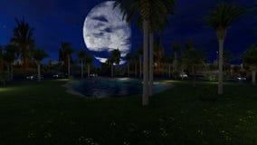 Μικρή ήρεμη λίμνη μεταξύ των δέντρων φοινικών τη νύχτα απόθεμα βίντεο