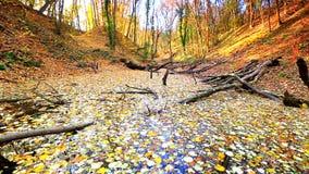 Μικρή λίμνη που καλύπτεται με τα κίτρινα φύλλα στο δάσος απόθεμα βίντεο