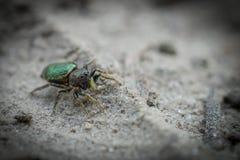 Μικρή αράχνη με πράσινο back_DSC3560 στοκ εικόνες με δικαίωμα ελεύθερης χρήσης