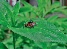 μικρή αράχνη Στοκ Φωτογραφίες