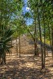 Μικρή αρχαία πυραμίδα της παλαιάς των Μάγια πόλης πολιτισμού που κρύβεται στο τ στοκ φωτογραφίες