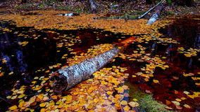 Μικρή δασική λίμνη Στοκ Φωτογραφίες