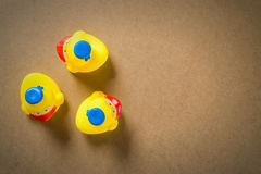 Μικρή λαστιχένια πάπια νεοσσών τρία Στοκ Εικόνα