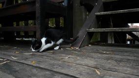Μικρή γάτα στο παλαιό του χωριού σπίτι απόθεμα βίντεο
