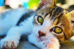 Μικρή γάτα Στοκ Φωτογραφίες