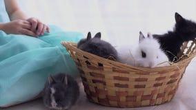 Μικρή διακοσμητική άσπρη συνεδρίαση κουνελιών στο καλάθι Ο εορτασμός Πάσχας απόθεμα βίντεο