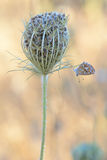 Μικρή λεπτή πεταλούδα που ισορροπείται Στοκ εικόνα με δικαίωμα ελεύθερης χρήσης