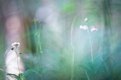 Μικρή ζωή - φύση Στοκ φωτογραφίες με δικαίωμα ελεύθερης χρήσης