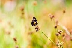 Μικρή ζωηρόχρωμη πεταλούδα Στοκ φωτογραφίες με δικαίωμα ελεύθερης χρήσης