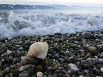 Μικρή θάλασσα snale στην ακτή στοκ εικόνες με δικαίωμα ελεύθερης χρήσης