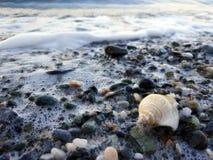 Μικρή θάλασσα snale στην ακτή στοκ φωτογραφίες με δικαίωμα ελεύθερης χρήσης