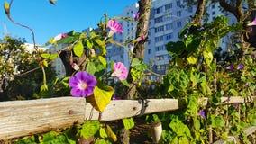 Μικρή ιώδης οικοδόμηση πλησίον διαβίωσης κρεβατιών λουλουδιών στοκ εικόνες
