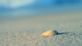 Μικρή κίτρινη θάλασσα κυμάτων παραλιών άμμου κοχυλιών απόθεμα βίντεο