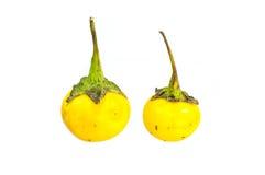 Μικρή κίτρινη μελιτζάνα Στοκ Φωτογραφίες