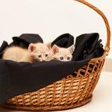 Μικρή καλή γάτα δύο στο ψάθινο καλάθι Στοκ Φωτογραφίες