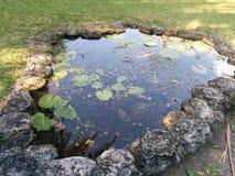 Μικρή λίμνη με τα lilypads που αυξάνονται σε το Στοκ Εικόνες