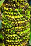 Μικρή μπανάνα Στοκ φωτογραφία με δικαίωμα ελεύθερης χρήσης