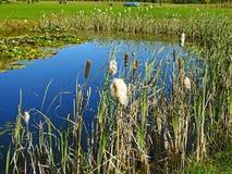 Μικρή μπλε άποψη λιμνών μέσω των καλάμων Στοκ φωτογραφίες με δικαίωμα ελεύθερης χρήσης