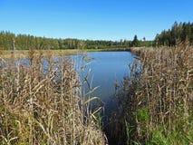 Μικρή μπλε άποψη λιμνών μέσω των καλάμων Στοκ Φωτογραφίες