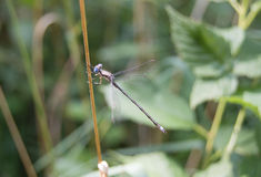 Μικρή μύγα δράκων Στοκ εικόνες με δικαίωμα ελεύθερης χρήσης