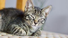 Μικρή νέα γάτα Στοκ Φωτογραφίες