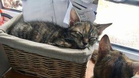 Μικρή νέα γάτα Στοκ Εικόνες