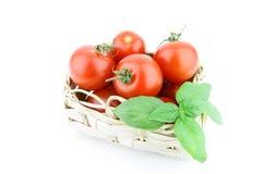 Μικρή ντομάτα Στοκ Εικόνες