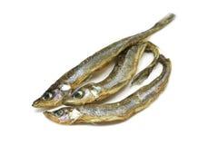 Μικρή ξηρά τήξη ουράνιων τόξων ψαριών Στοκ φωτογραφία με δικαίωμα ελεύθερης χρήσης