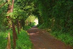 Μικρή πορεία μέσω ενός φυσικού δάσους στοκ φωτογραφία