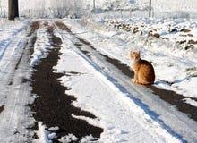 Μικρή πορτοκαλιά γάτα Στοκ Εικόνα