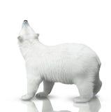 Μικρή πολική αρκούδα Στοκ εικόνες με δικαίωμα ελεύθερης χρήσης