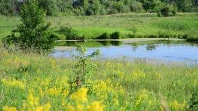 Μικρή σαφής λίμνη στο κεντρικό μέρος της Ρωσίας φιλμ μικρού μήκους