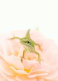 Μικρή σαύρα στο ροδαλό λουλούδι Στοκ φωτογραφία με δικαίωμα ελεύθερης χρήσης