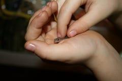 Μικρή σαύρα στο child& x27 χέρι του s Στοκ Εικόνες