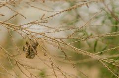 Μικρή φωλιά σφηκών στοκ εικόνα με δικαίωμα ελεύθερης χρήσης