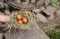 Μικρή φωλιά σανού λαβής χεριών με τα ωοειδή αυγά κοτόπουλου Στοκ Φωτογραφίες
