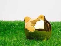 Μικρή piggy τράπεζα πίσω από ένα μικρό μπάλωμα της φρέσκιας χλόης Χρυσός piggy Στοκ φωτογραφίες με δικαίωμα ελεύθερης χρήσης