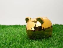 Μικρή piggy τράπεζα πίσω από ένα μικρό μπάλωμα της φρέσκιας χλόης Χρυσός piggy Στοκ εικόνα με δικαίωμα ελεύθερης χρήσης