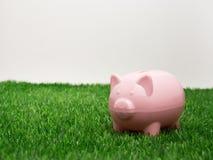 Μικρή piggy τράπεζα πίσω από ένα μικρό μπάλωμα της φρέσκιας χλόης Στοκ Εικόνες