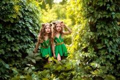 Μικροί δασικοί κάτοικοι στοκ φωτογραφία με δικαίωμα ελεύθερης χρήσης